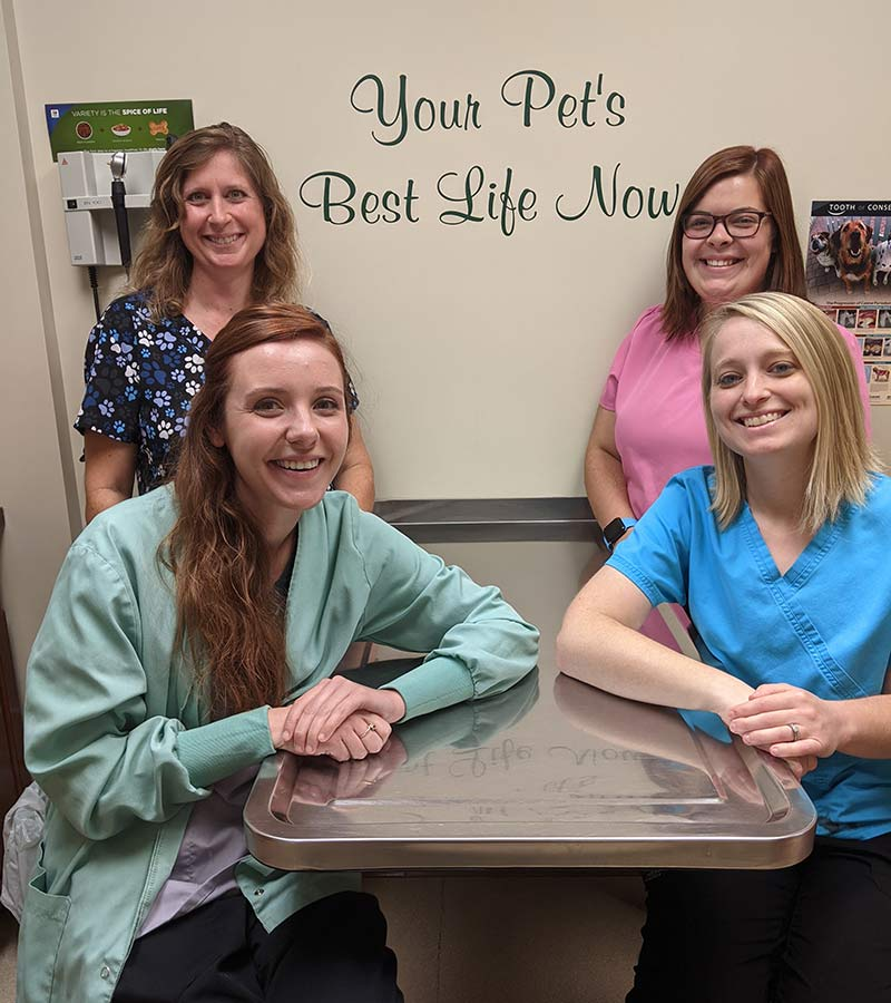 Dillsboro Veterinary Careers